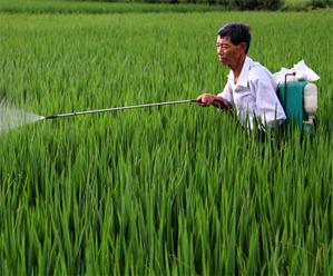 水稻立枯病的发生的因素与防治办法_如何防治水稻纹枯病_水稻立枯病用什么药